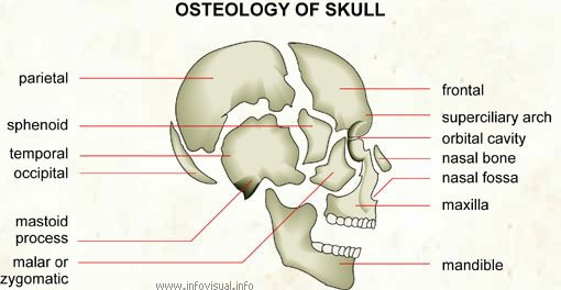 How forensic anthropologists find out information from bones