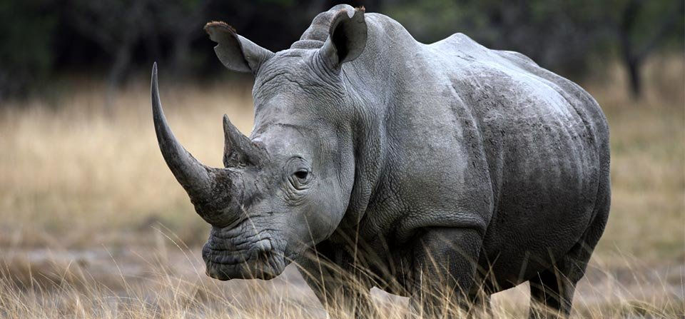 Forensic teams scour rhino killing scenes in Kruger park